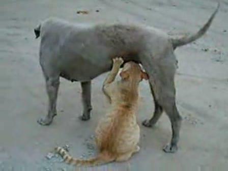 Canlılar 19 kedi kopek yavru sevgi1