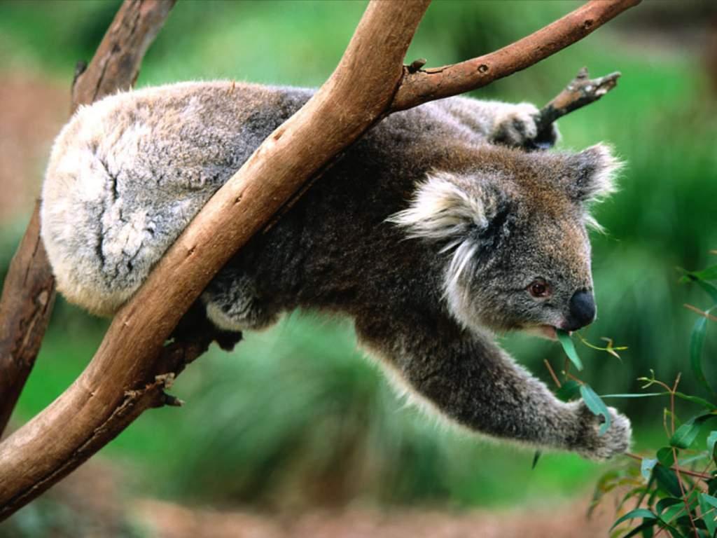 Hayvanlar ve dogal cevreyi konu alan guzel bir belgesel