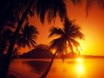 palmiyeler-gunes-gun-batimi-deniz-dfsd