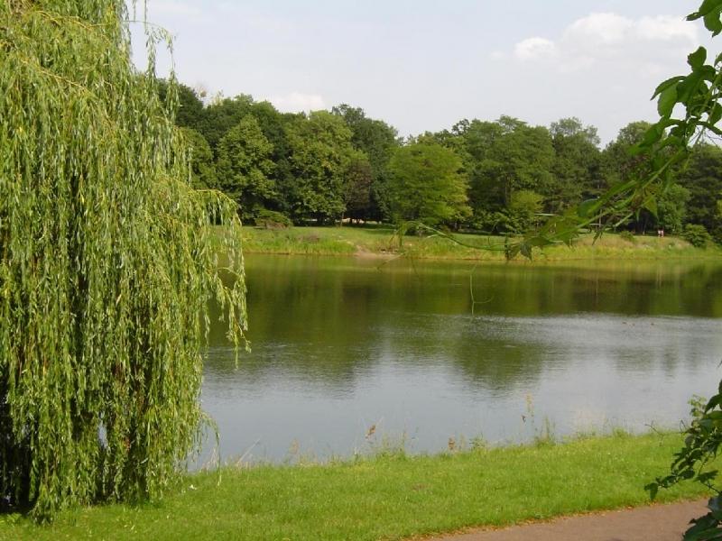 Manzara 43 park golet orman yesil sedir kiyi tatil