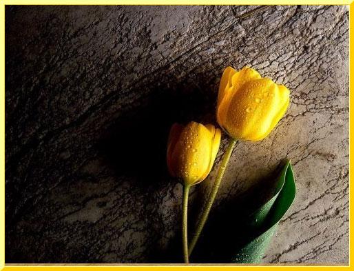 Manzara 38 sari gul resimleri