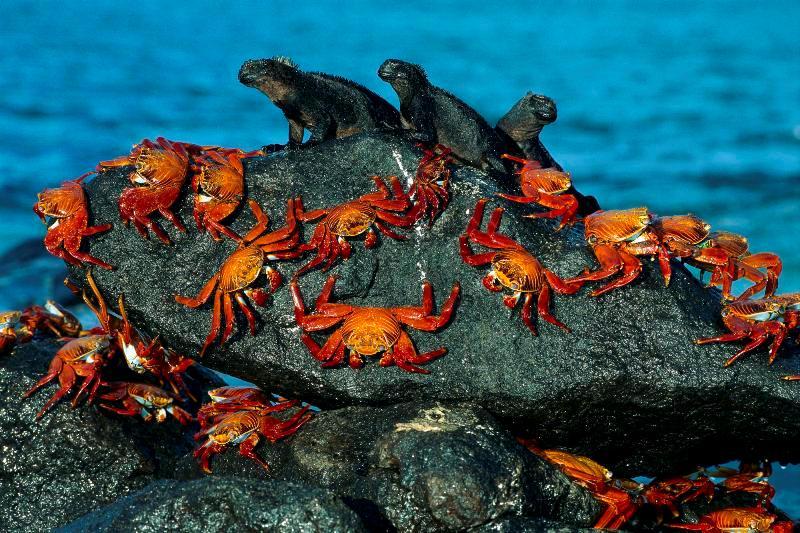 Canlılar 21 yengec kertenkele deniz kayalik hayvan resim doga